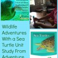 Wildlife Adventure Sea Turtle unit study review
